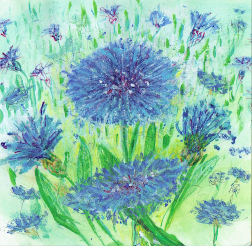 Meadow Cornflower