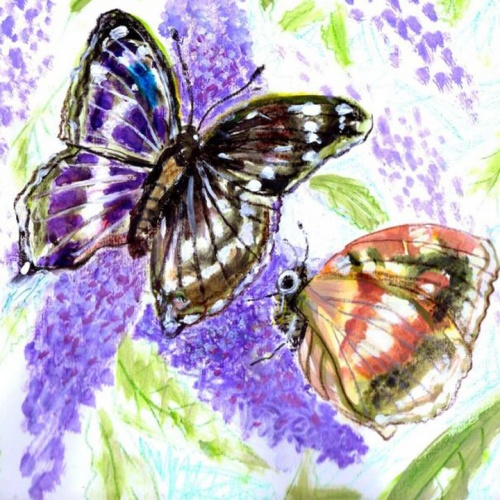 Buddleia and Butterflies