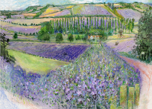 Lavender Fields, Shoreham Valley